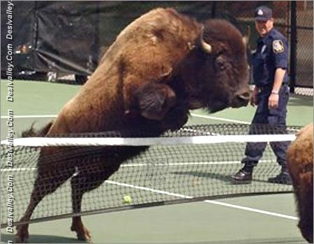 Funny Buffalo Images Funny Images Show