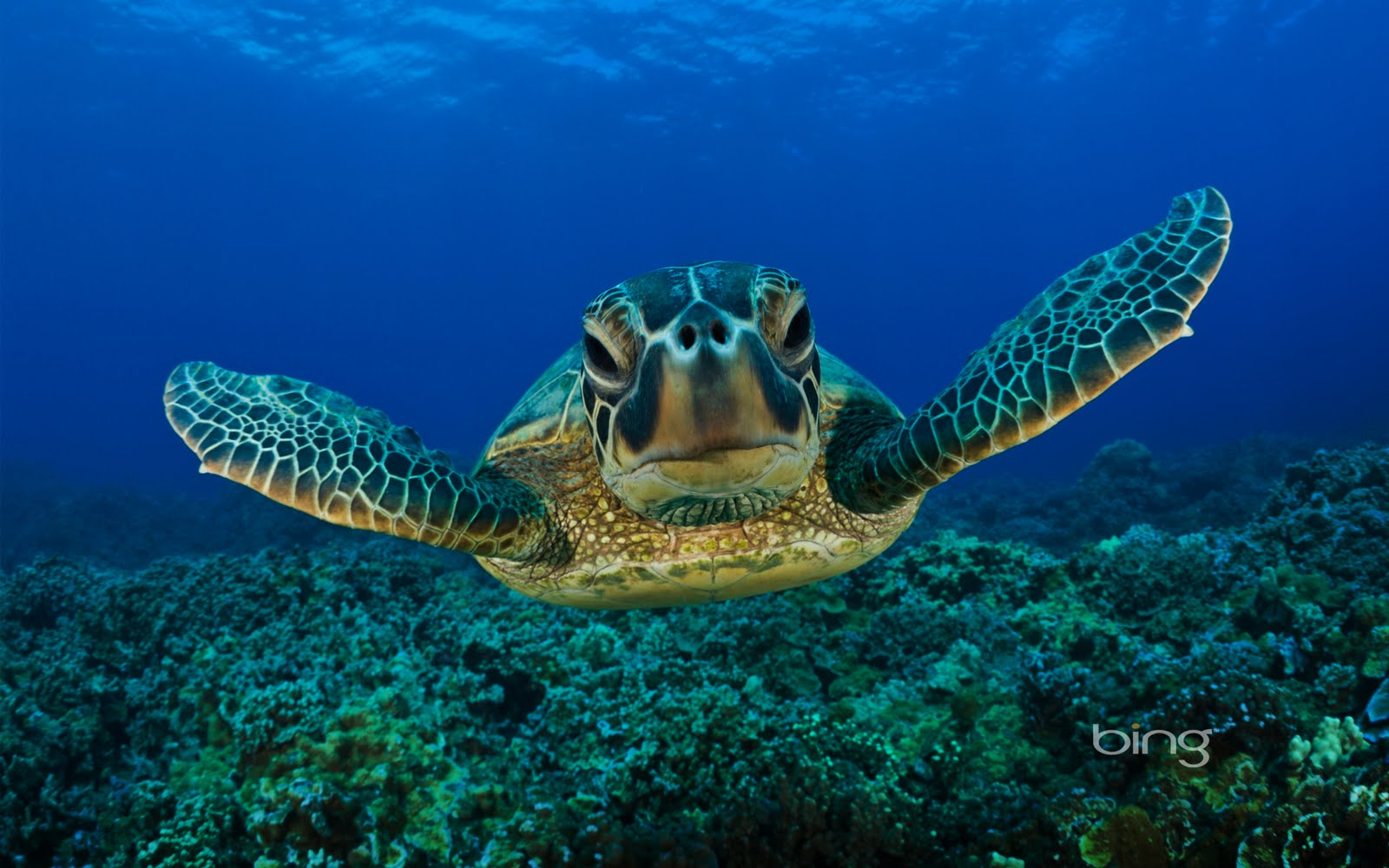 Funny 3d Animal Turtle Wallpapers Hd: Funny Turtle Wallpaper