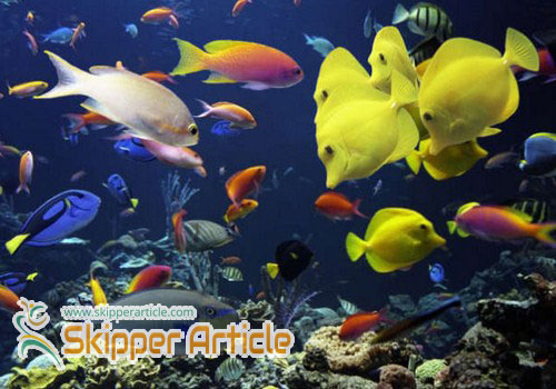Different Types of Saltwater Aquariums