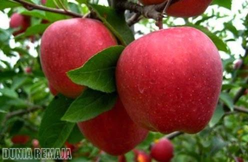 Apfel: Kulinarischer Alleskönner