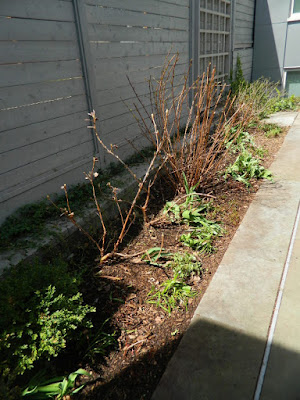 Summerhill Toronto spring backyard garden clean up after by Paul Jung Gardening Services