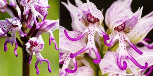 Bunga Cantik Berbentuk Aneh Dan Unik