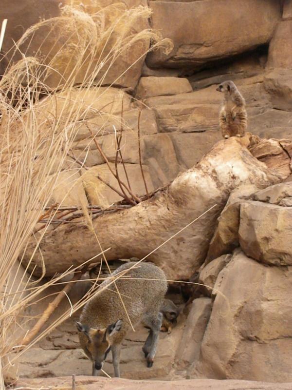 Omaha Zoo Snakes Desert