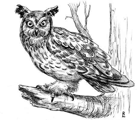 Luschek Illustration Blog: For the Birds