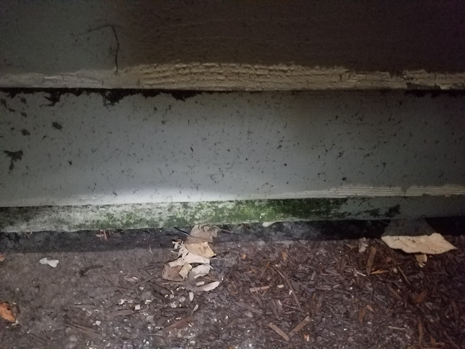 Renton pest control: Getting rid of little black ants in a ...