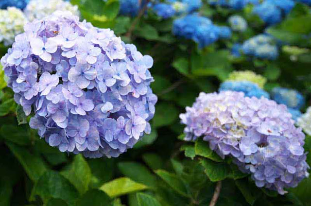 Flowers blossoming in Okinawa