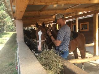 Unkari, El Bronco, Riitta Reissaa, Horsexplore