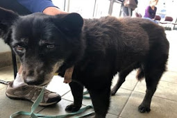 15 years old bonded senior sat in the Lobby when their family felt like it was time to be euthanized