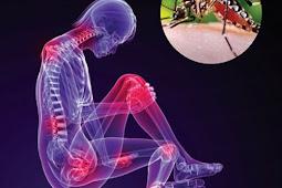 Cara menyembuhkan penyakit chikungunya secara alami