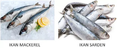 Ikan Sarden vs Ikan Mackerel