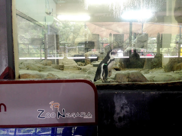 penguin zoo negara