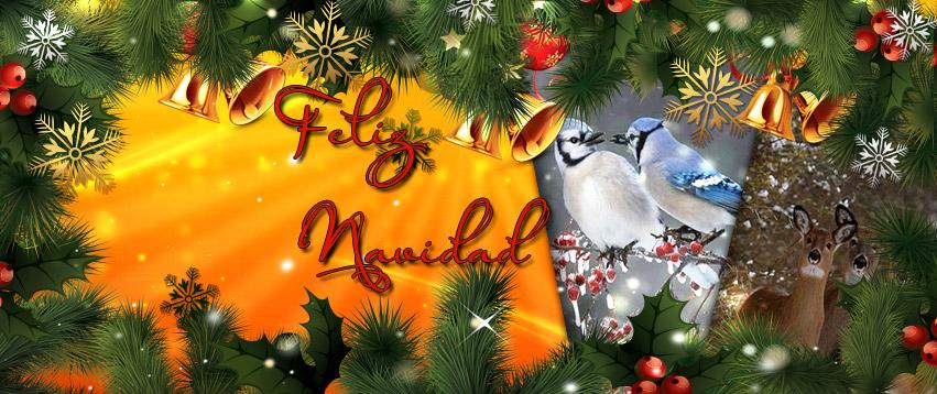 Spanische Weihnachtsbilder.Weihnachtsbilder Downloaden Gratis Weihnachtsbilder