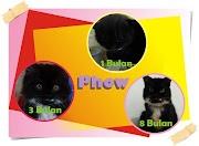 Mengetahui Tahapan Pertumbuhan Anak Kucing