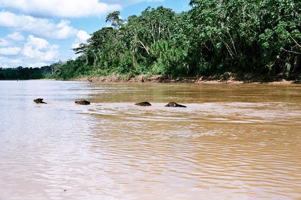 แม่น้ำที่ยาวที่สุดในโลก, แม่น้ำพูรัสเป็นลำน้ำสาขาของแม่น้ำอเมซอนอยู่ในอเมริกาใต้ มีพื้นที่ลุ่มน้ำ 63,166 ตารางกิโลเมตร (24,389 ตารางไมล์) และอัตราการไหลเฉลี่ย 8,400 ลูกบาศก์เมตรต่อวินาที