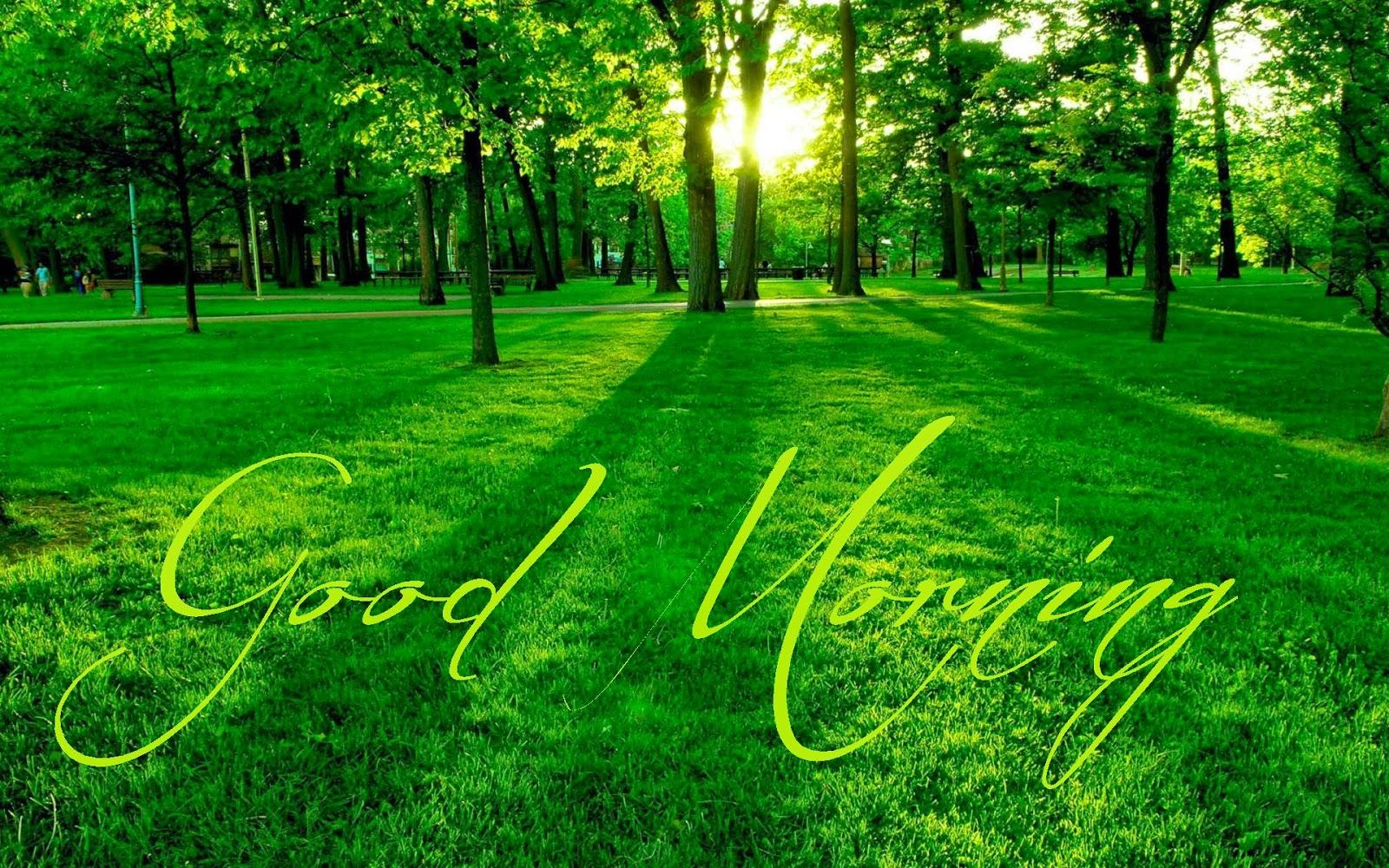 Lovely Good Morning Best Nature Hd Wallpapers Festival