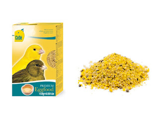 Makanan Burung Kenari dari Bahan Pilihan Agar Burung Sehat