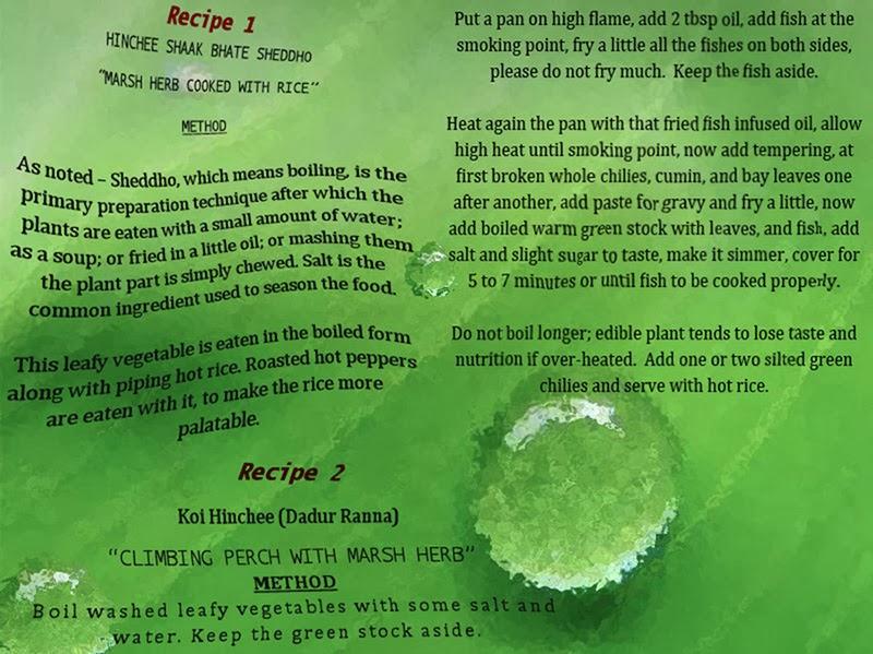 Koi Hinche jogolbondi - Marsh herb and climbing perch, a culinary duet