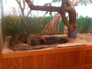 snakechase