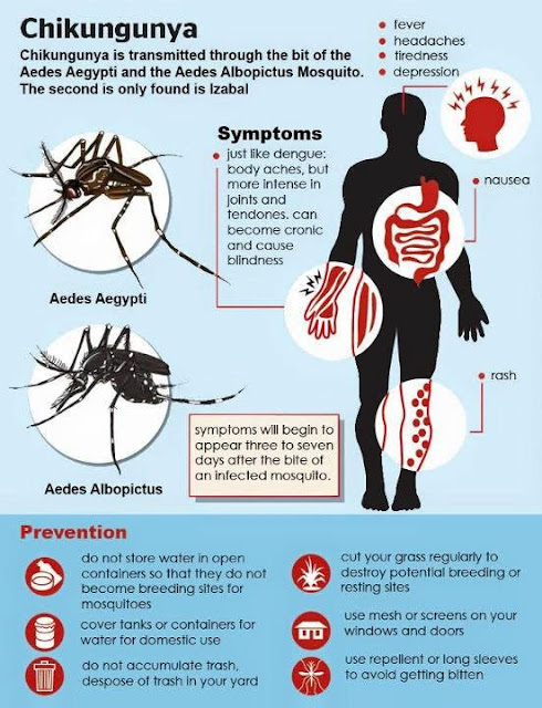 Chikungunya Virus Symptoms, Diagnosis, & Treatment