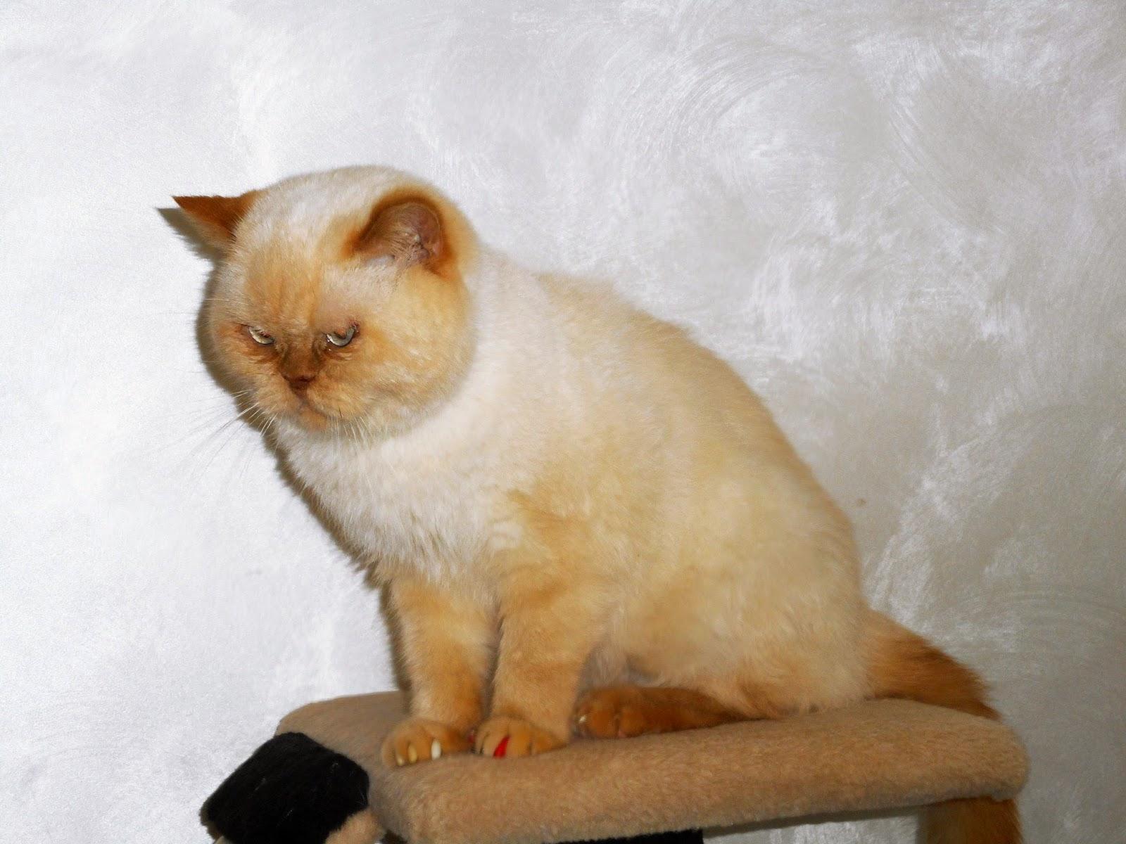 житель кото - кафе, грустит... хочется, наверное, в свой дом...