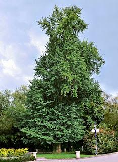 Contoh Tanaman Berbiji Terbuka : contoh, tanaman, berbiji, terbuka, Tumbuhan, Berbiji, Terbuka, (Gymnospermae), Ciri-ciri,, Contoh,, Gambar,, Reproduksi:blog