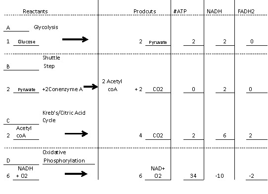 cycle acid citric krebs carbon dioxide produced biology january