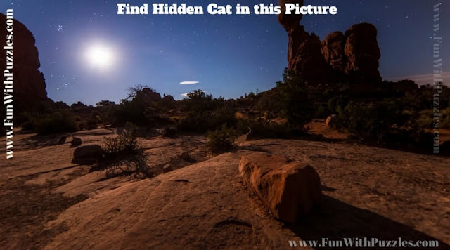 Test you Observational power by finding hidden Cat in this Picture Puzzle