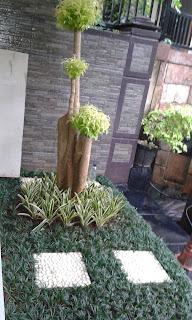 Jual tanaman hias pengganti rumput,jual tanaman kucai mini