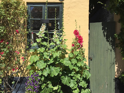 House and hollyhocks in Dragør.