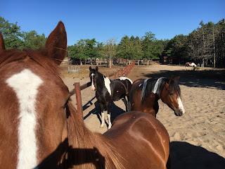 El Bronco, Riitta Reissaa, Horsexplore, Unkari