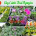 Cây Cảnh Thái Nguyên, Cửa hàng bán hoa cây cảnh tại Thái Nguyên