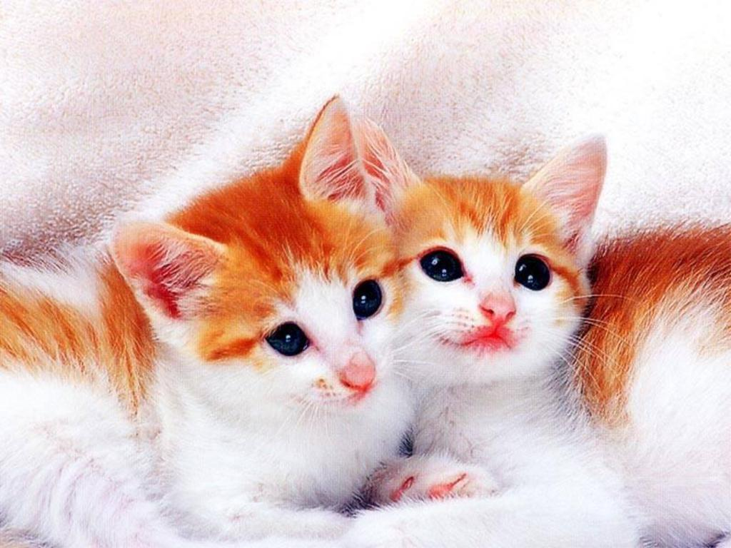 Beautiful Naughty Cats Wallpapers