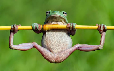 Frog hanging on picture