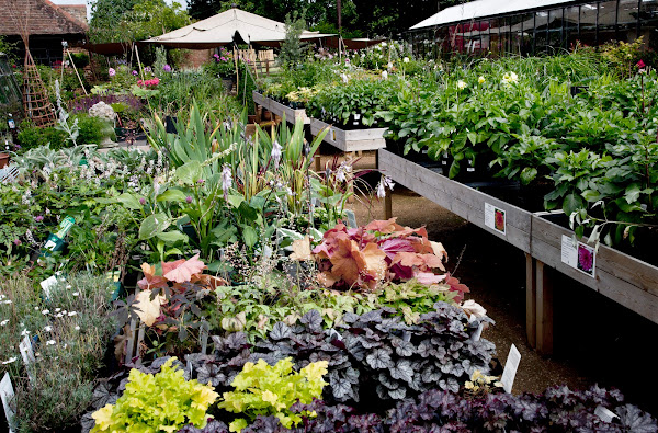 Petersham Nurseries4