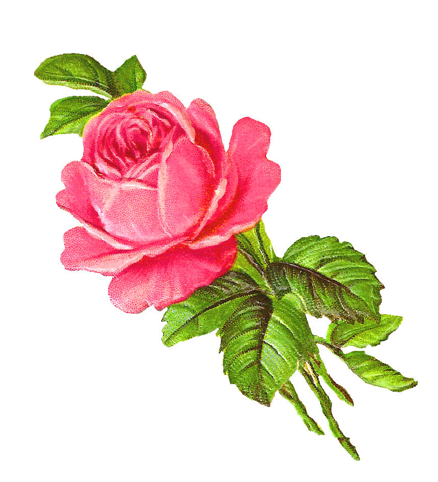 free clipart roses flowers - photo #20