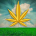Maryjane implies business: Everything you have to think about the cannabis industry