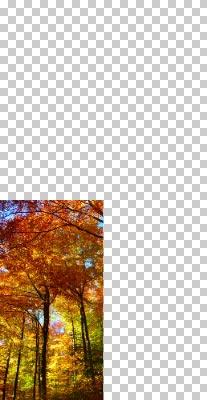 Merubah-Foto-Menjadi-Gambar-Pola-Abstrak-Di-Photoshop-3