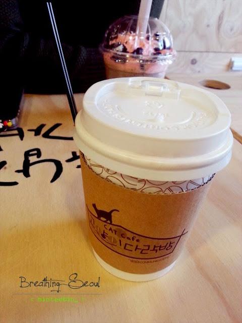 cat cafe sinchon seoul