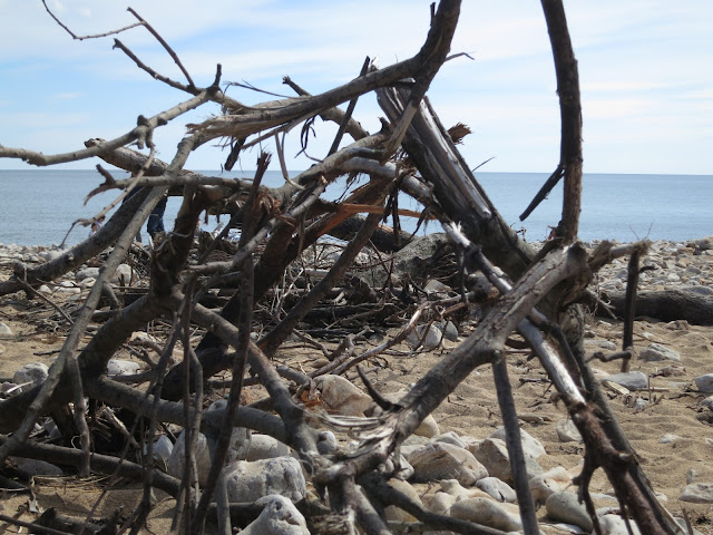 A tangle of branches and twigs with stones on a beach.