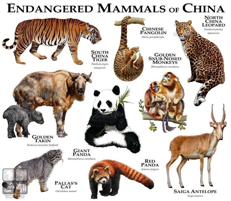 Mamíferos Ameaçados na China