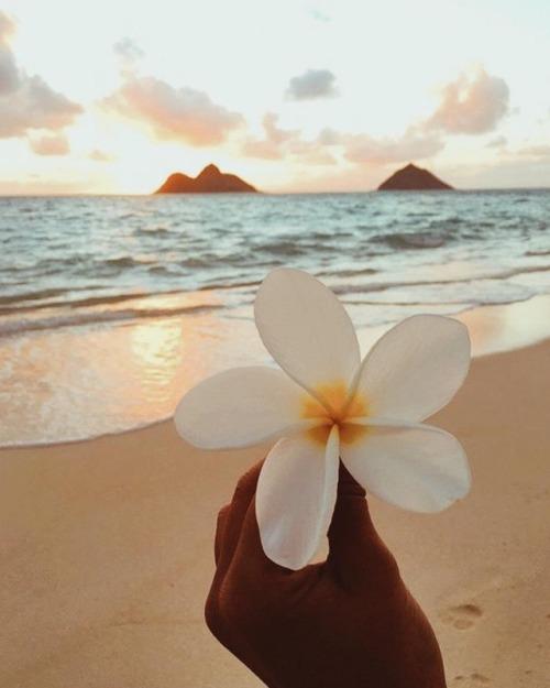 """""""Que Tudo Aquilo Que Tocar o Nosso Coração possa encher nossa Vida de Paz, nossa Alma de Alegria e nosso Caminho de Luz."""