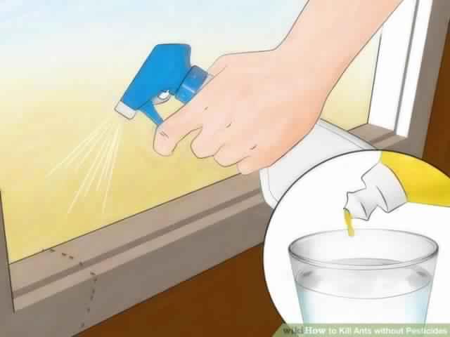 6 rem des faciles pour liminer les fourmis sans produits. Black Bedroom Furniture Sets. Home Design Ideas