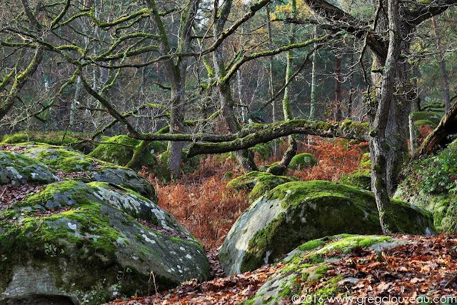 Dans les Gorges d'Apremont, Fontainebleau, France