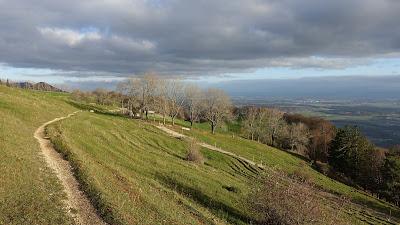 Trail kurz vor dem Hofbergli