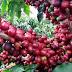 Com registro nacional, café do Norte Pioneiro impulsiona a região