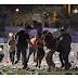 HIVE NEWS:: Las Vegas: Mass shooting in Mandalay Bay shooting