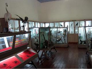 Museo de Historia Natural - UNSAAC