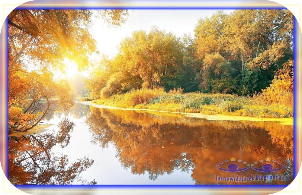 Piękna Jesień na Planecie Ziemi - Rzeka Las Drzewa
