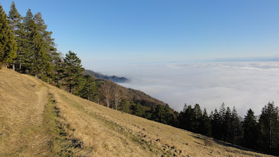 Vom Niederwiler Stierenberg zum Hofbergli