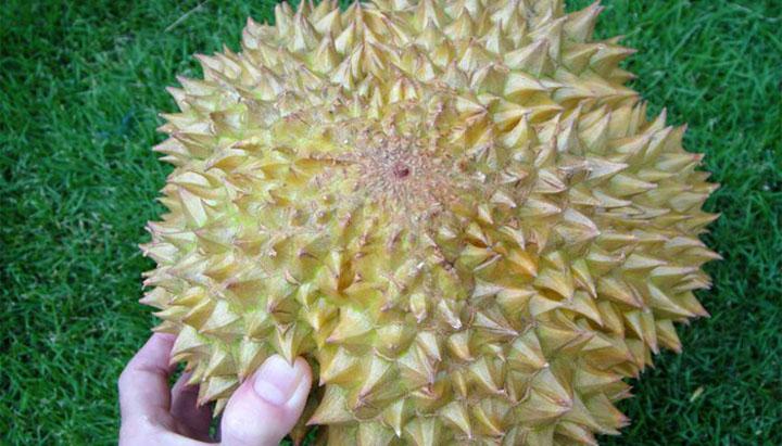 Pilih buah durian dengan lima pangsa